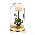 Örökrózsa üvegbúrában - nagy méretű pezsgő örök rózsa