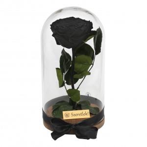 Örökrózsa üvegbúrában - nagy méretű fekete örök rózsa