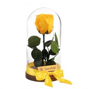Örökrózsa üvegbúrában - sárga