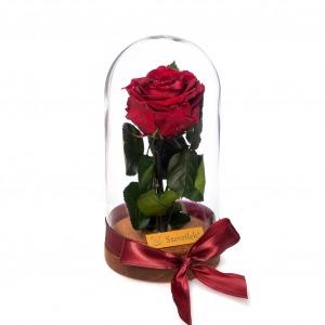 Örökrózsa üvegbúrában - Vörös