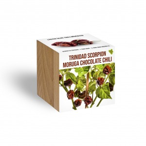 Trinidad Scorpion Moruga chocolate chili növényem fa kaspóban