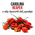 Carolina reaper chili paprika növényem fa kockában