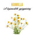 Kamilla növényem fa kaspóban