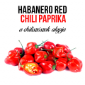 Piros habanero chili paprika növényem fa kaspóban