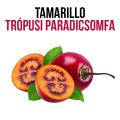 Tamarillo - Trópusi paradicsomfa - növényem fa kaspóban